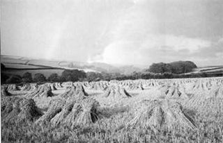Corn stooks, Devon 1939