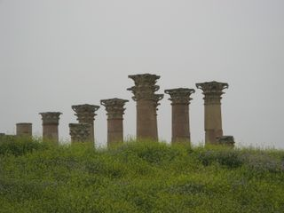 Jerash - columns and flowers