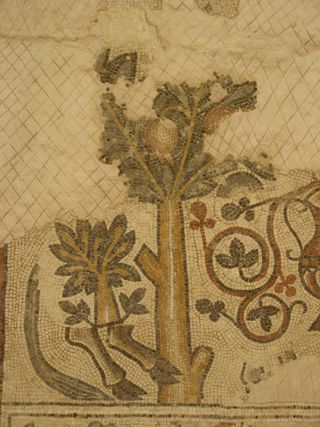 Madaba mosaic - tree and ox