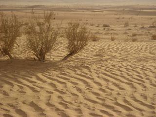 Wadi Rum - sand ripples