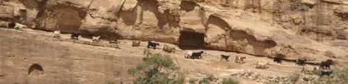 Petra - goats crossing a ledge