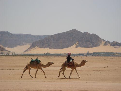 Wadi Rum - camels