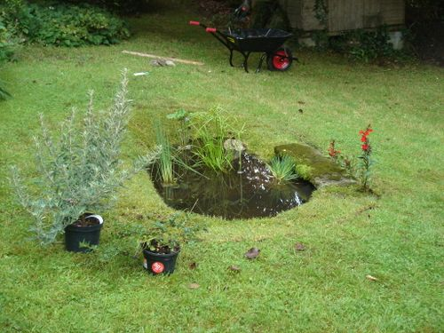Garden pond, Dorset