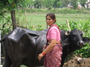 Indian woman-with-her-cow
