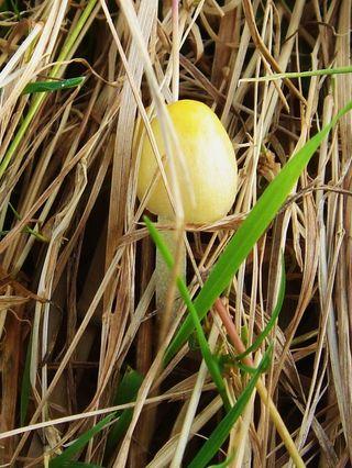 Fungi, Eggardon (2)