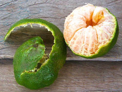 World's best mandarin