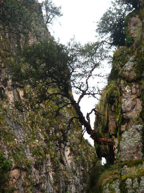 Gorge with ..., Peru