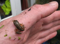 Frog_in_the_hand
