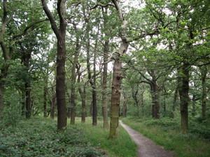 Oak_woods_horsenden