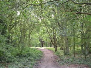 Barn_hill_woods