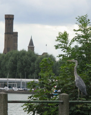 Heron_at_the_castle