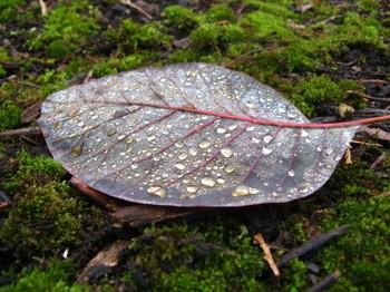 Winter_leaf