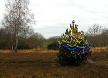 Xmas_tree_on_putney_heath