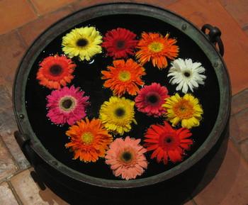 Floating_flowers