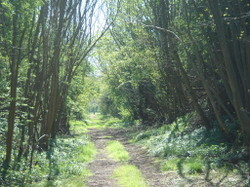 Green_lane_coln_valley