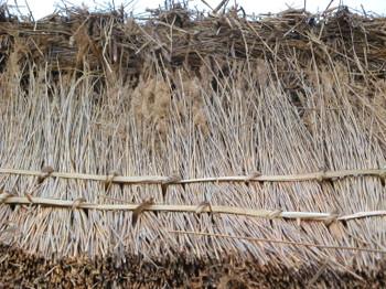 Thatch_2_new_reeds