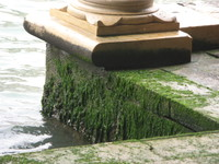 Venice_weed_and_water