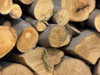 Beech_wood